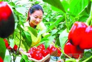 阜阳打造综合性农业企业 精品蔬菜远销京沪等地